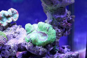 Underwater coral purple sea water Coral reef №53824