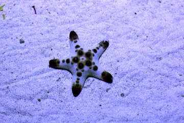 Starfish №53878