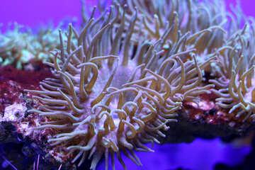 Underwater plant sea anemone hurricane №53813