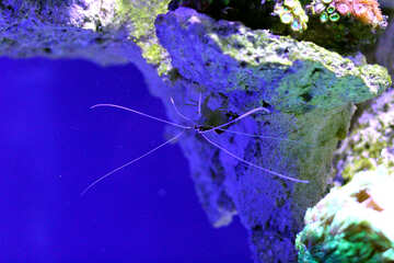 Underwater spider Sea Ocean insect star blue №53827
