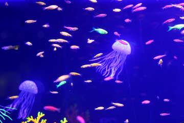 Sea jelly fish №53786