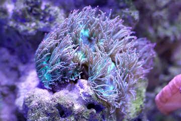 anemone jelly fish purple coral tree №53821