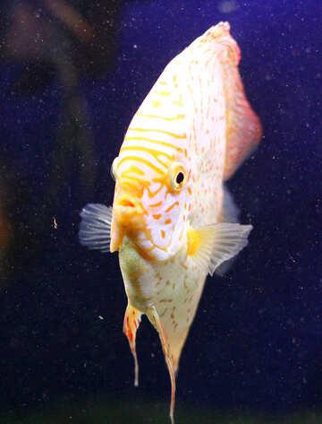 Fish closeup №53962