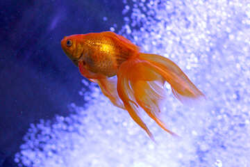 Pesce rosso №53787