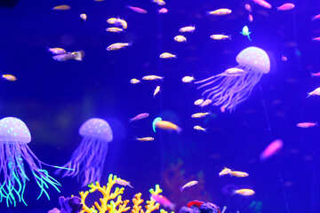 Under water scene, There are at least three jellyfish floating around and multiple fish around There is an underwater plant also visible in the frame  ocean Jellyfish coral №53784