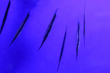 lines blue color background Violet scratches purpleness №53838