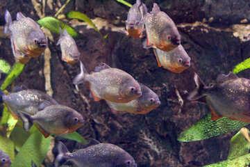 fish in the ocean №53887