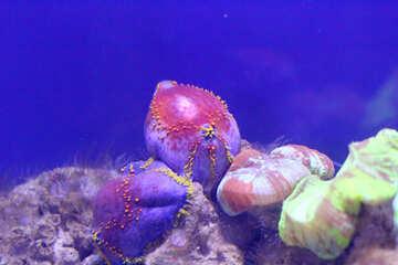 sea octopus Ocean Underground №53764