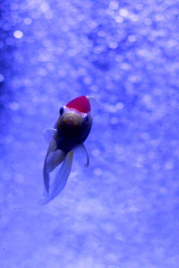 so pretty fish in water blue №53792
