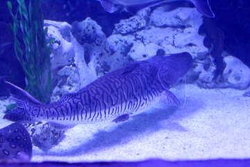 fish is tank underwater №53935