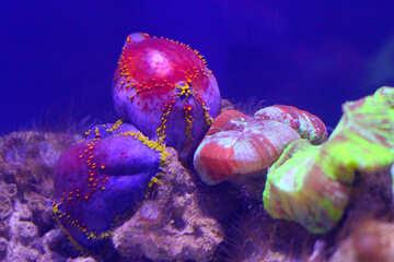 underwater scene sea №53763