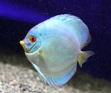 White  fish in blue water