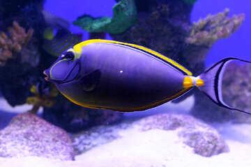 Il pesce Dory №53911