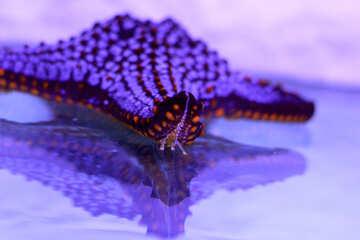 starfish №53877