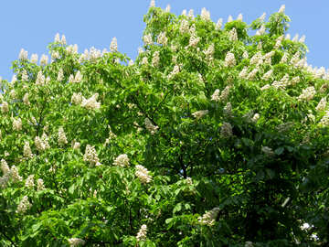 tree for powerpoint bush plant flowers white №53379