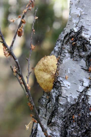C`è un albero e un ramoscello e una foglia Natura secca №53327