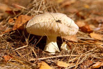 Mushroom №53279