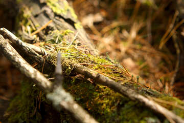 Ramoscelli e foglie albero brunch foglie di erba registro il legno №53292