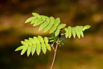 A plant leaves branch fern №53299