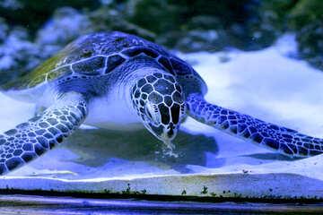 big turtle in the sea №53882