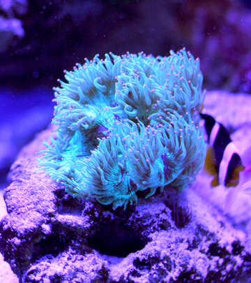 aqua plant and fish №53775