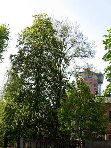 trees, green, sky №53376