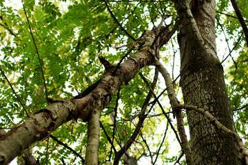 Tree branch №53731
