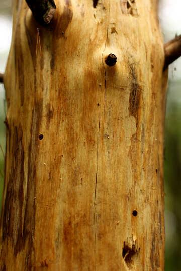 Tree with no bark №53724