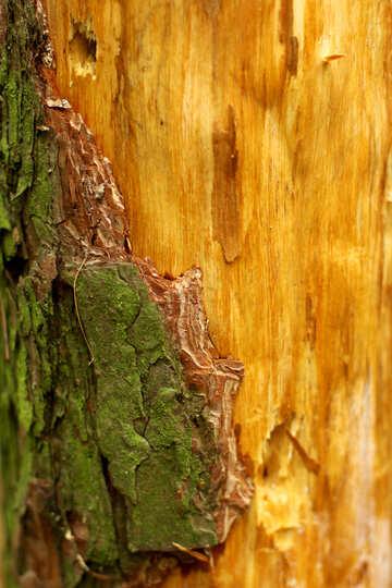 wood tree brown trunk №53725