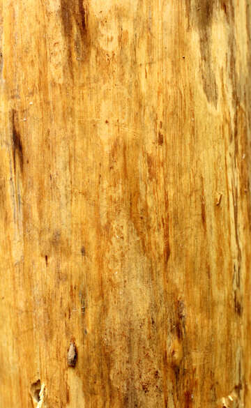 wood panel texture №53727