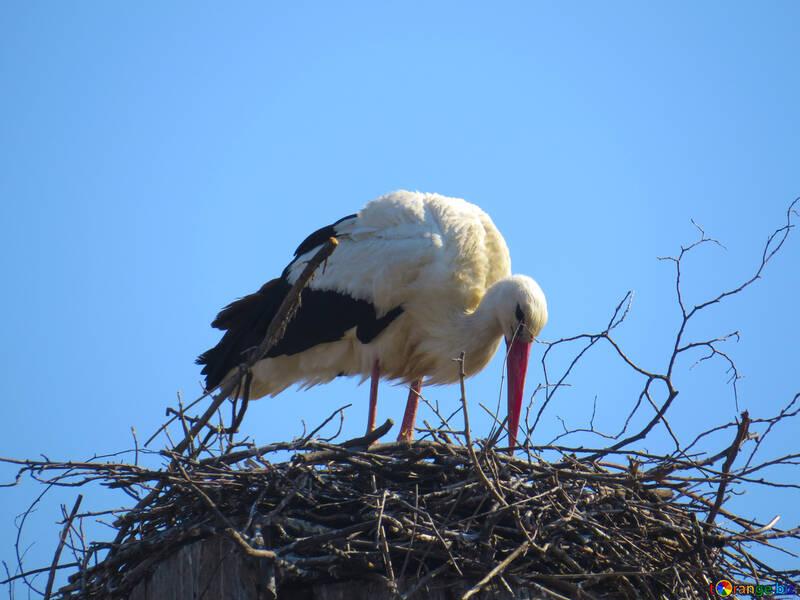 bird nest Stoke №53182
