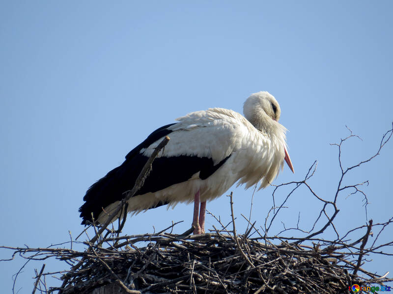 a bird in the nest stork №53187