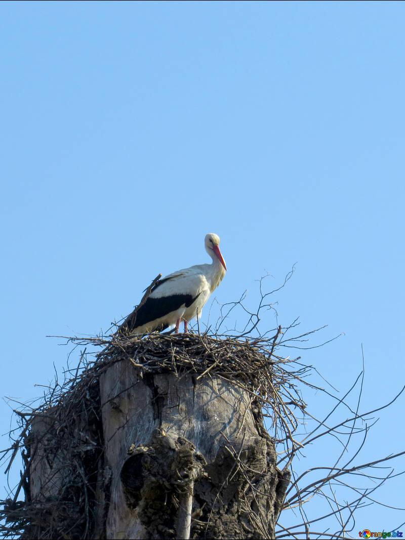 Stork bird in nest on post №53179