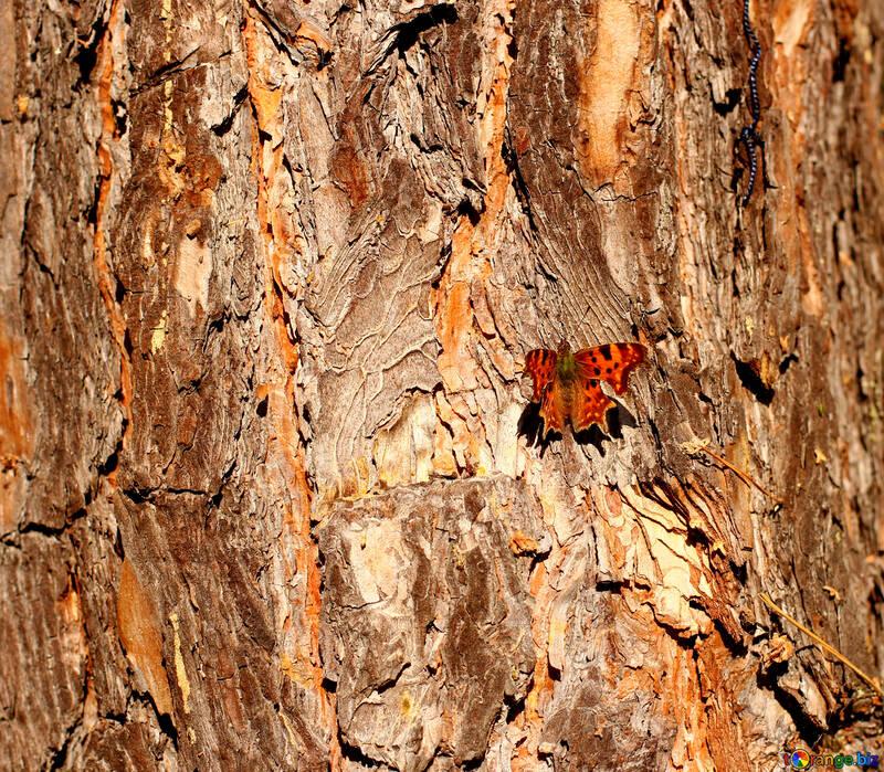 Tree bark Old tree butterfly №53256