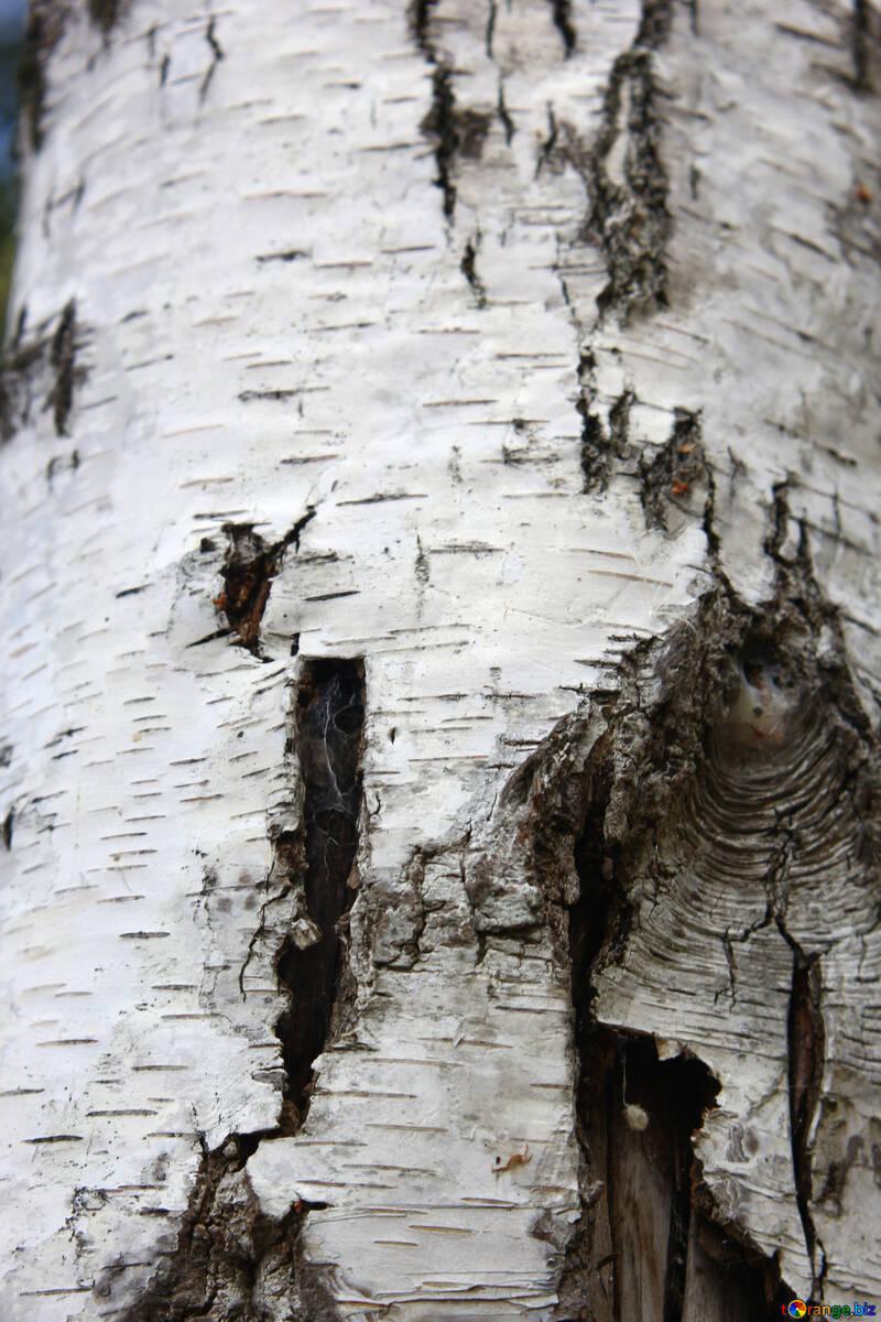 bark Tree cork №53326