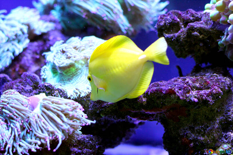 Gold fish under the sea №53795