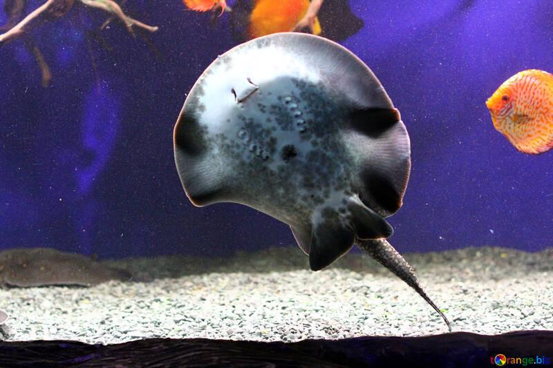 stingray dunno fish №53968