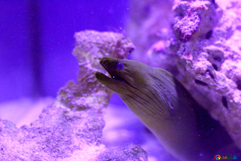 An animal with coral moraine fish purple №53758