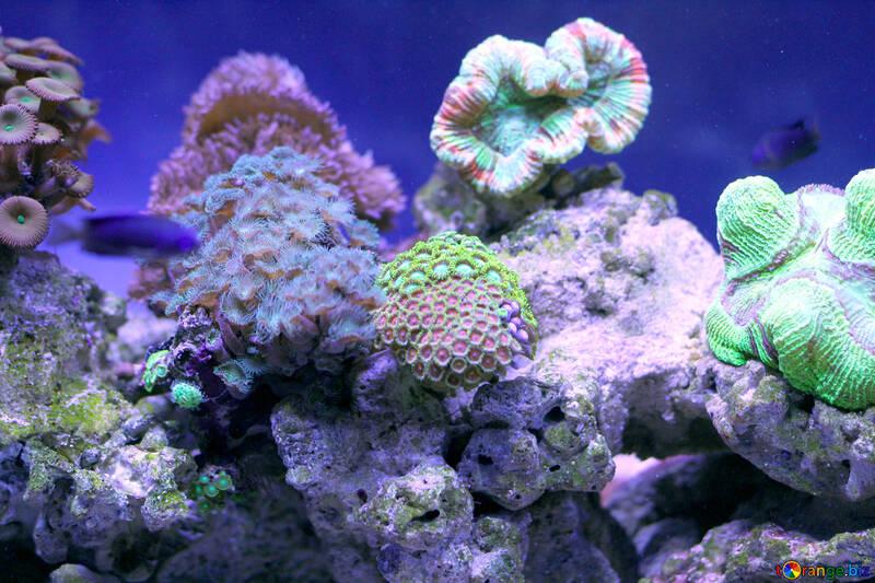 coral underwater undersee ocean garden №53826