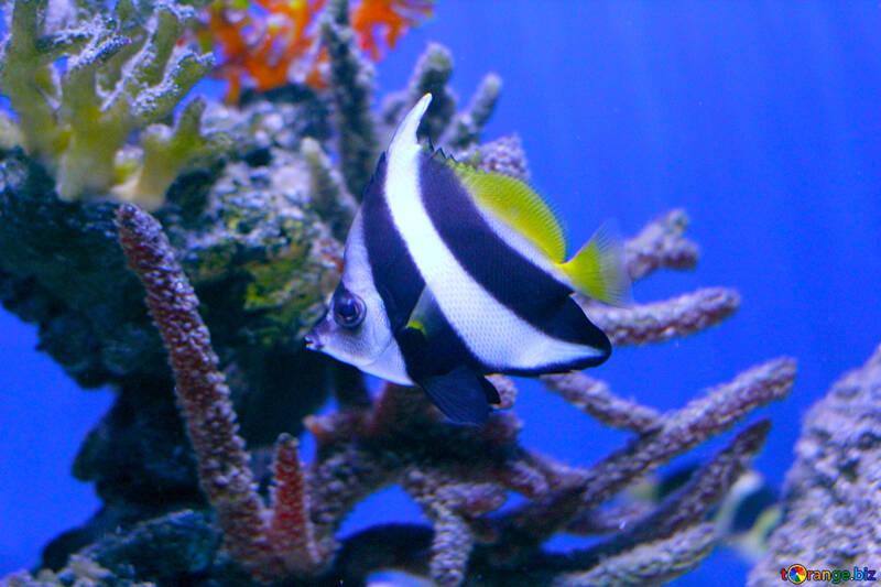 nice ocean angel fish in the water №53915
