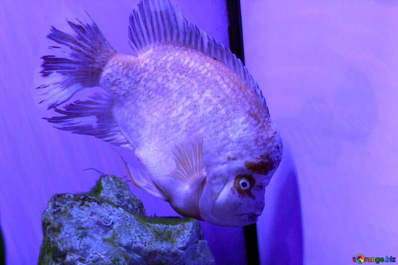 scary fish purple №53874