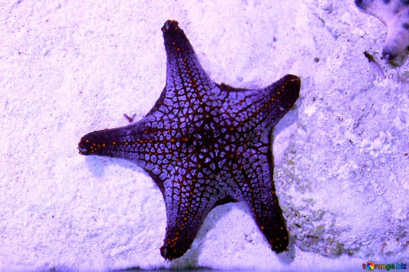 star fish starfish №53875