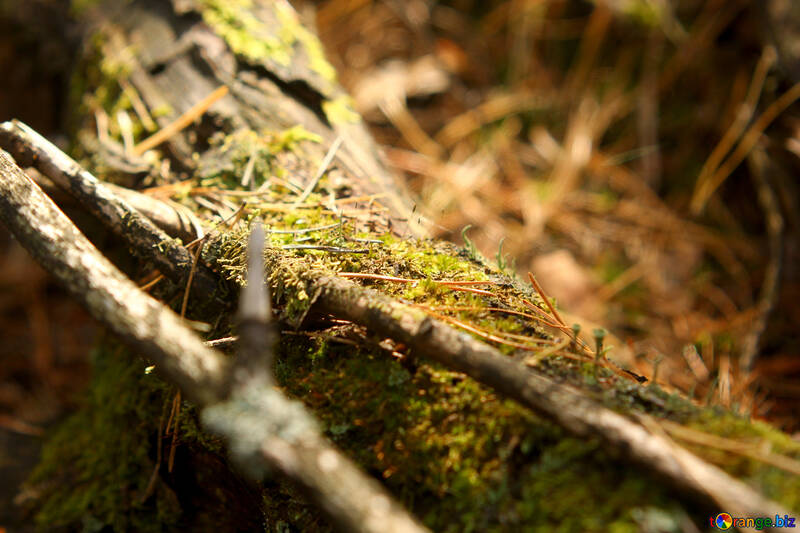 twigs and leaves tree brunch grass leaves log the wood №53292