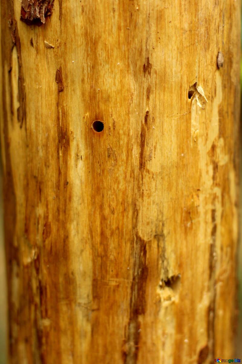 Natural wood texture №53723