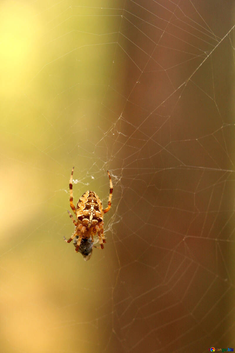 Forest spider on its web №53302
