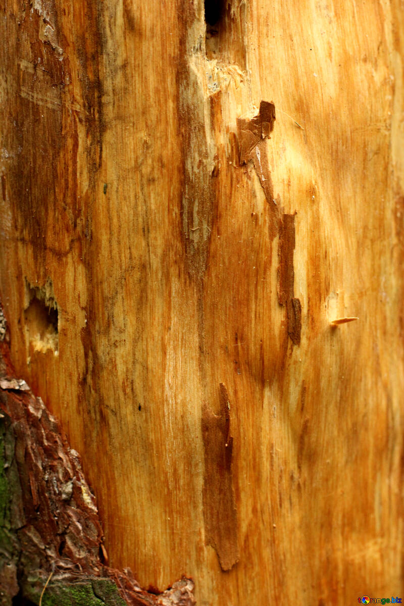 Tree wood with wrapped bark №53726