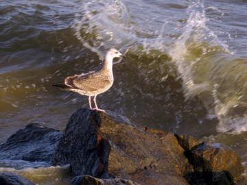 Water bird standing rock wave beach №54428