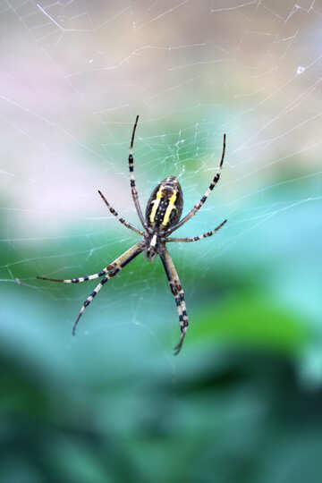 Big spider in web №54140