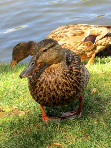 Duck face №54372