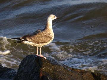 A bird on a rock in the ocean №54448
